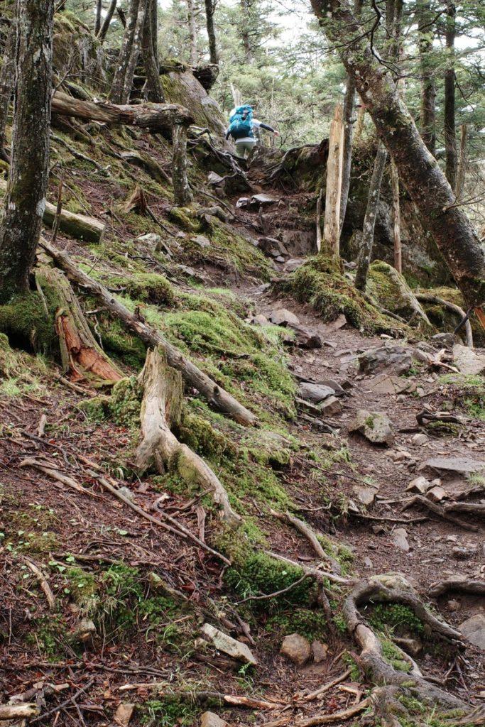 介山荘の先を熊沢山に登る途中