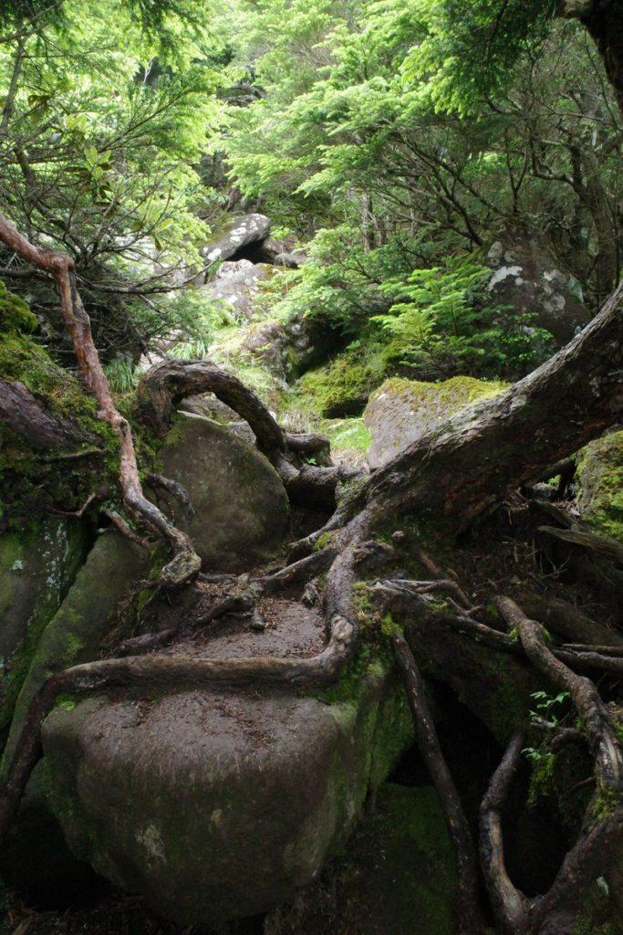 岩の登山道